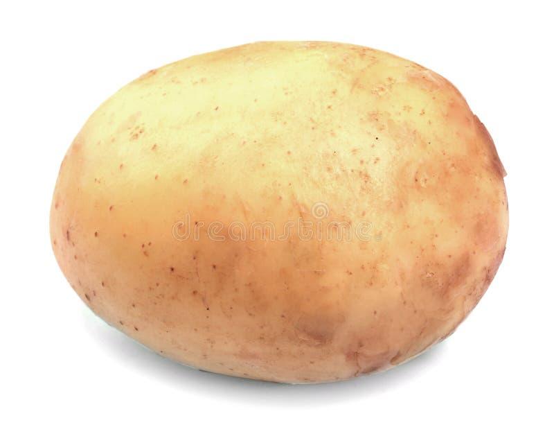 Органическая, свежая, зрелая и сырцовая картошка, на белой предпосылке Конец-вверх новой картошки Сбор лета овощей стоковое фото rf