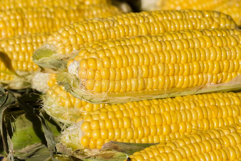 фото рекламы кукуруза в турцию санька