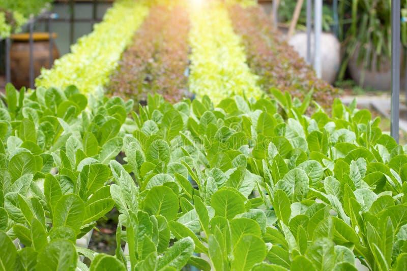 Органическая свежая hydroponic vegetable ферма Современное witho культивирования стоковое фото rf