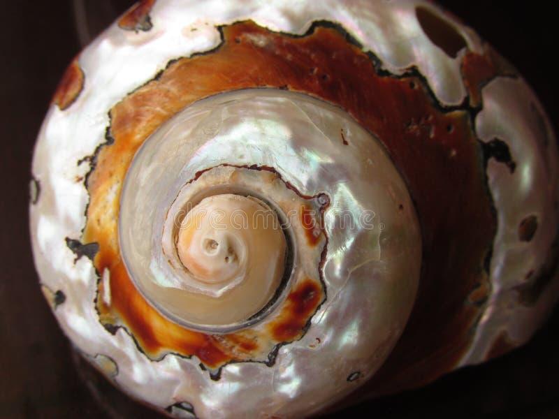 Органическая текстура - Seashell - раковина стоковые изображения rf