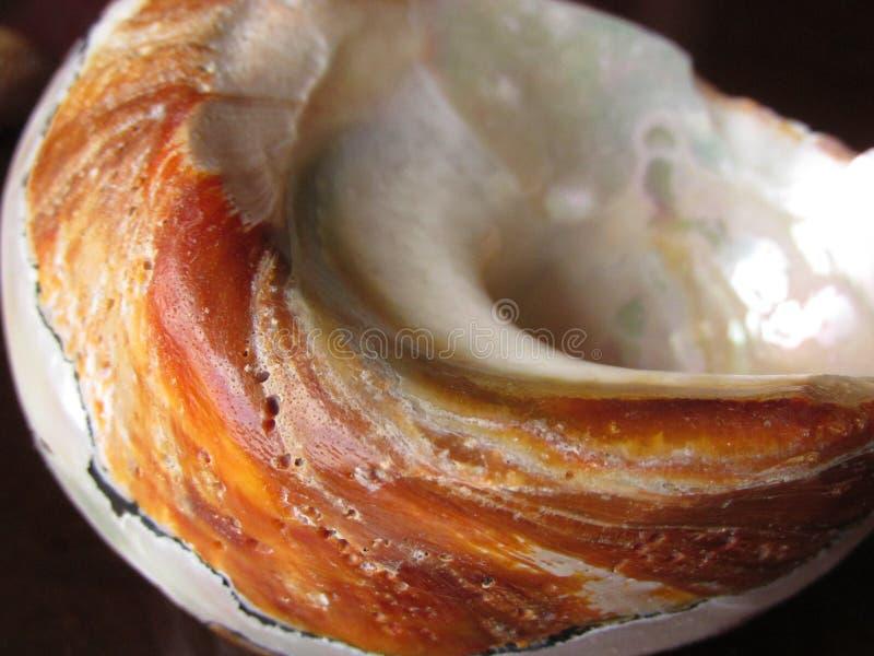 Органическая текстура - Seashell - раковина стоковые фото