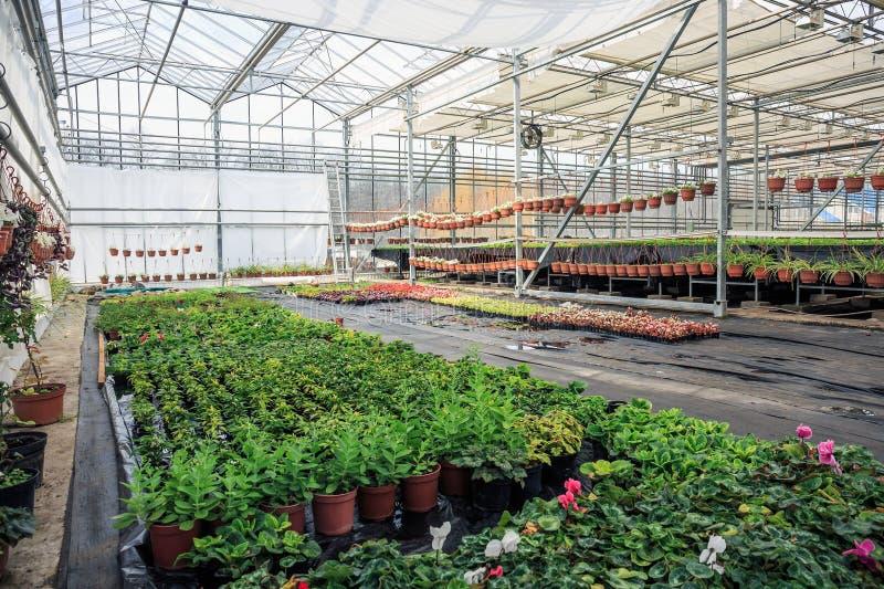 Органическая hydroponic ферма питомника культивирования орнаментальных заводов Большой современный парник стоковое изображение
