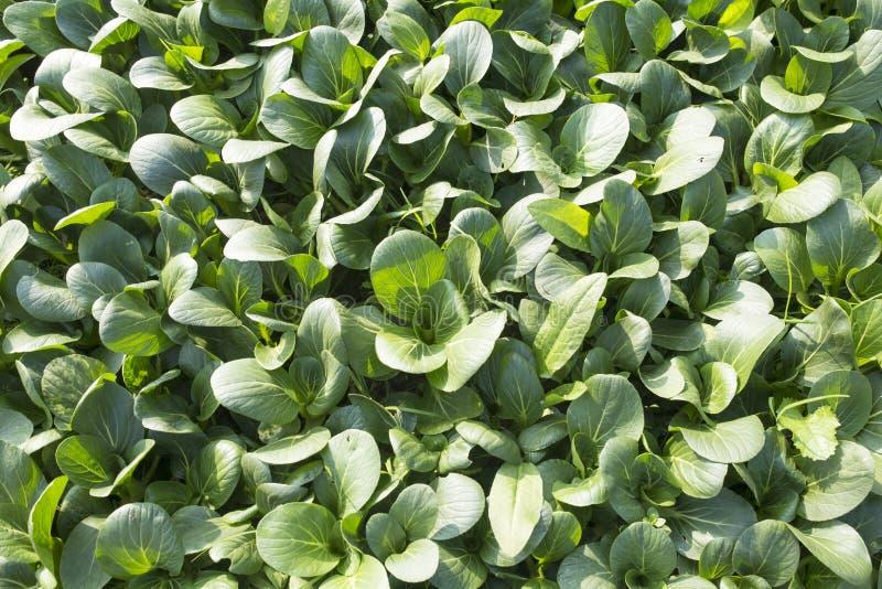 Органические зеленые овощи стоковое фото rf