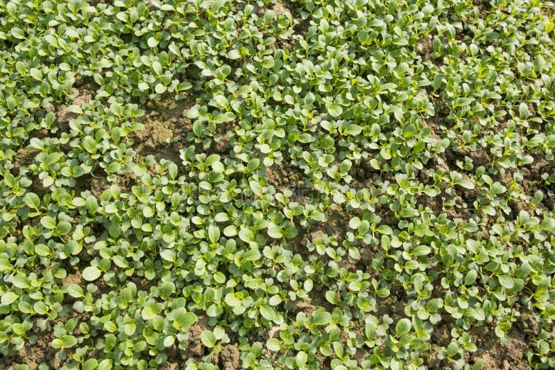 Органические зеленые овощи стоковое фото
