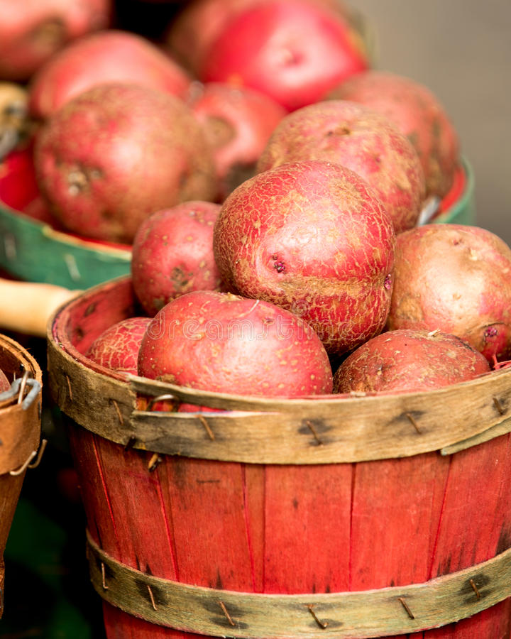 Органические картошки в корзине стоковая фотография