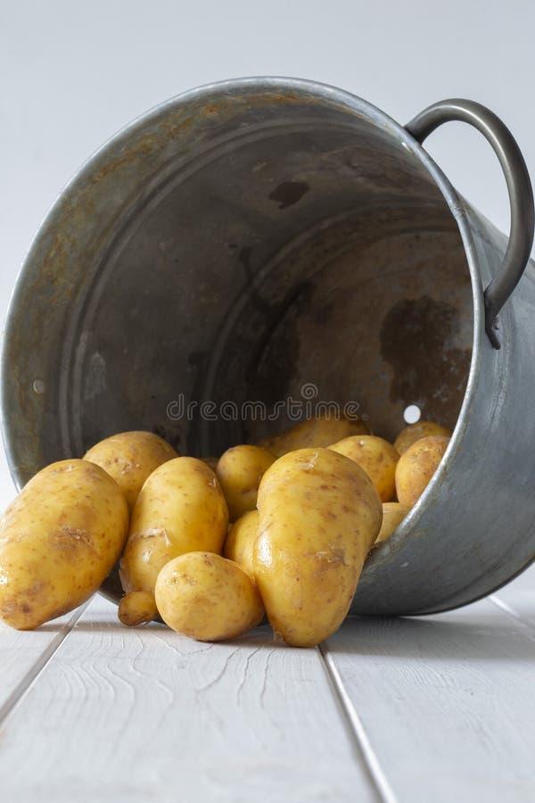 Органические картошки, свежо скомплектованные, в ведре контейнера металла стоковое изображение