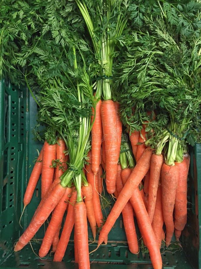 Органические моркови с зеленым веществом стоковые изображения rf