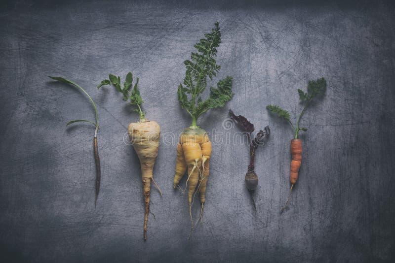 Органические овощи корня на выдержанной Scratchy предпосылке стоковые изображения