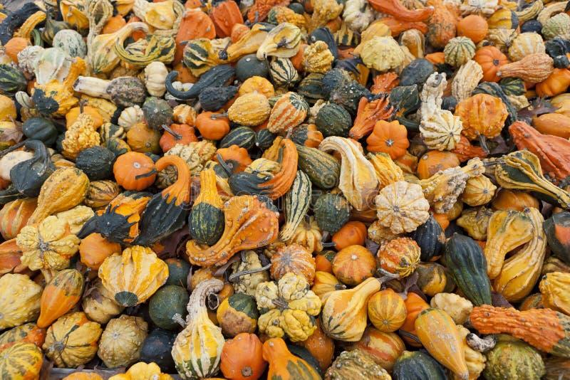 Органические орнаментальные тыквы стоковая фотография
