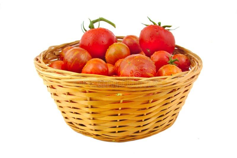 Органические томаты в корзине изолированной на белизне стоковое фото