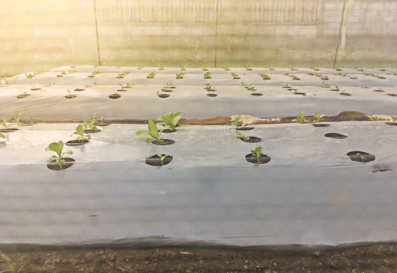 Органический обрабатывать землю с предохранением от нейлона чистым о стоковое изображение