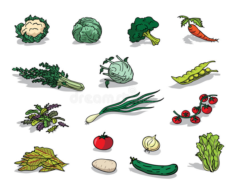 органический овощ иллюстрация вектора