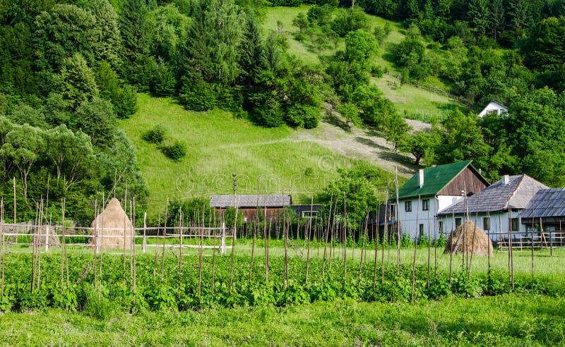 Органический огород стоковое изображение rf