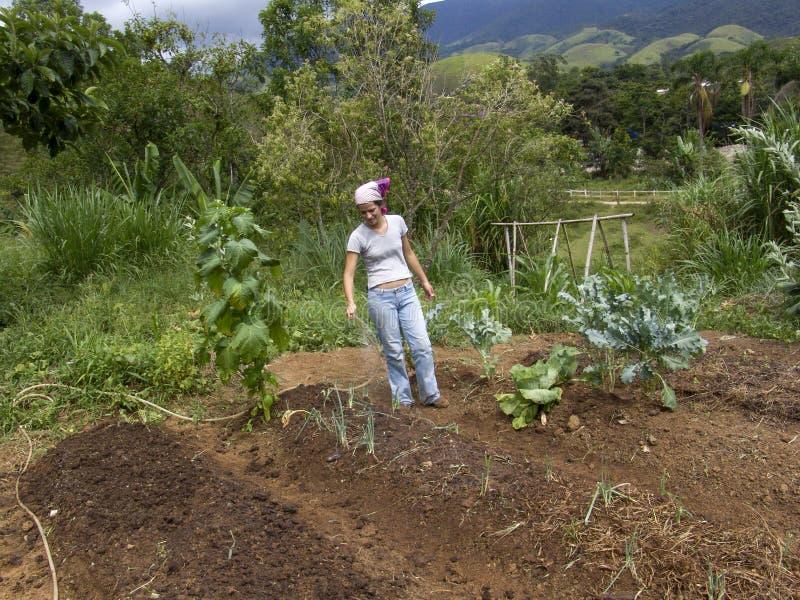 Органический сад салата стоковые изображения rf