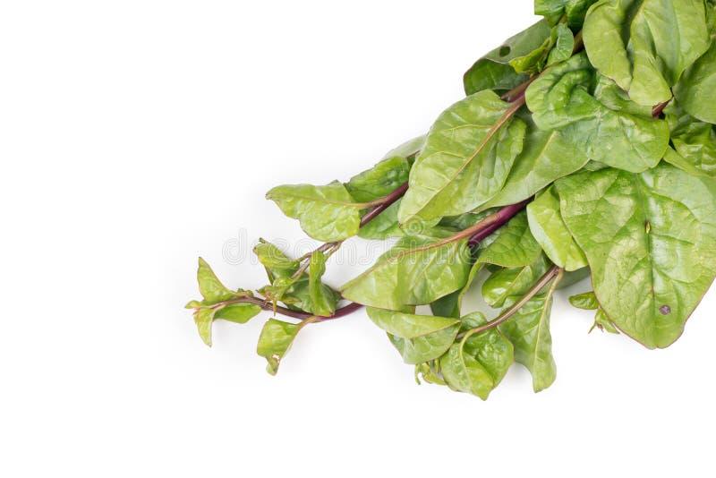 Органический свежий сырцовый пук красного шпината Malabar стоковая фотография rf