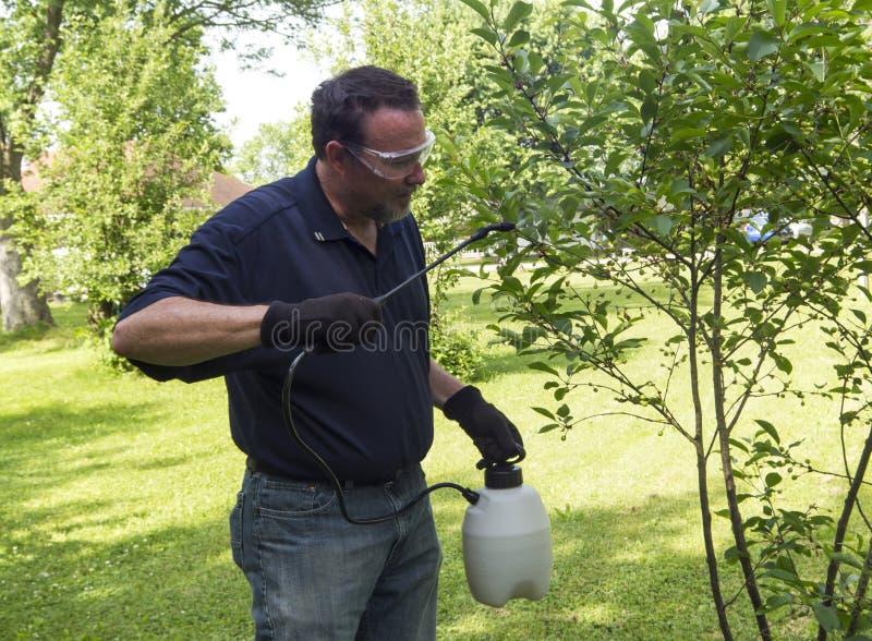 Органический фермер распыляя вишневое дерево с органическим брызгом стоковые фото