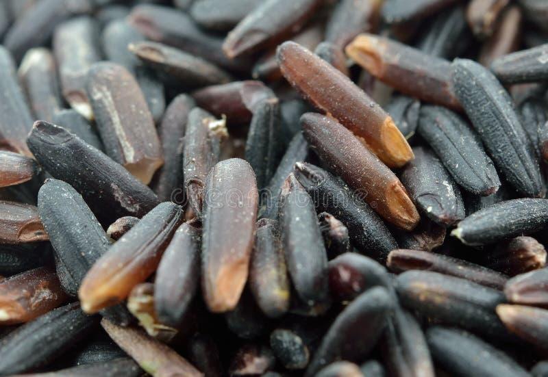 Органический черный фиолетовый рис стоковое изображение