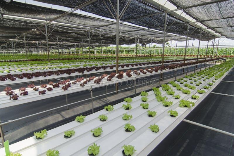 Органическое растущее урожаев стоковые изображения rf