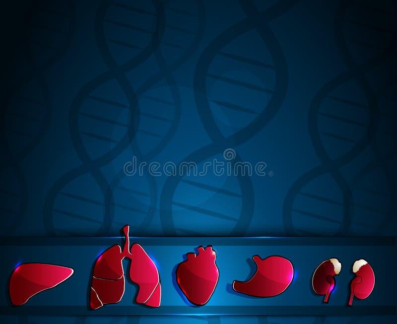 Органы анатомии бесплатная иллюстрация