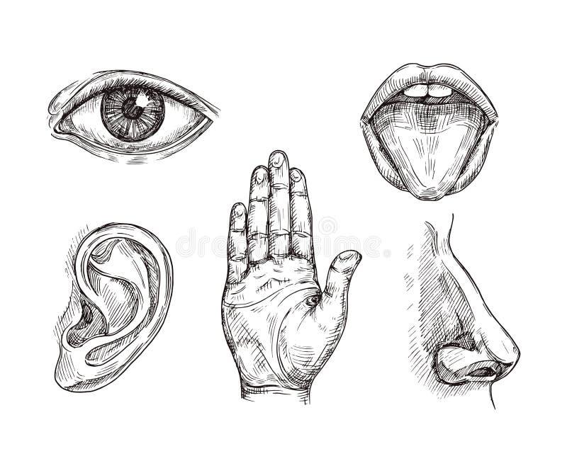Органы чувства Рот руки вычерченные и ладонь языка, глаза, носа, уха и руки Гравировать иллюстрацию вектора 5 чувств иллюстрация штока