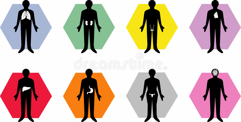 орган икон тела медицинский иллюстрация вектора