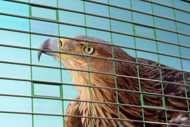 орел над окнами стоковое изображение rf