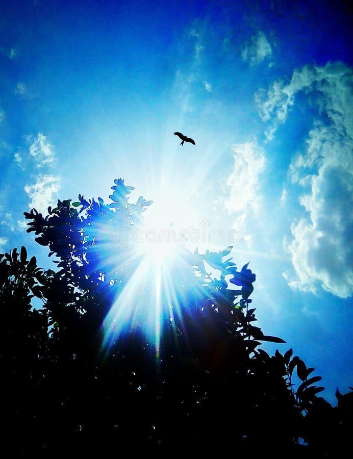 Орел против неба стоковая фотография