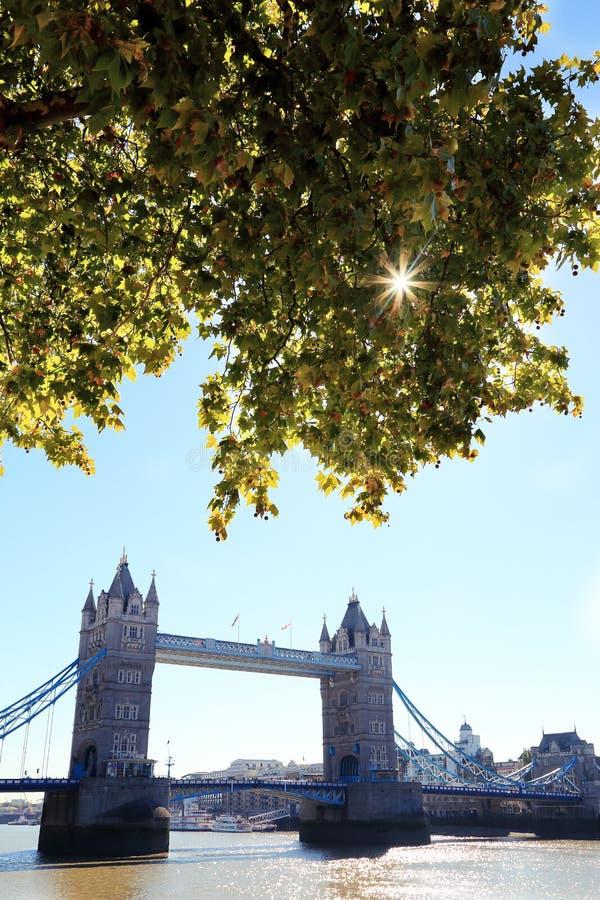 Ориентир моста башни Лондона, Великобритании, с ветвью весны стоковое изображение