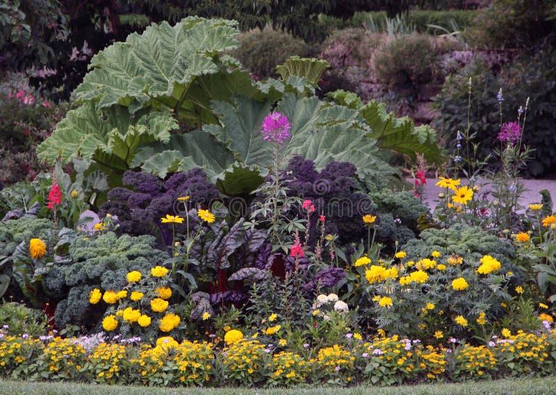 Орнаментальная кровать сада цветков стоковое изображение