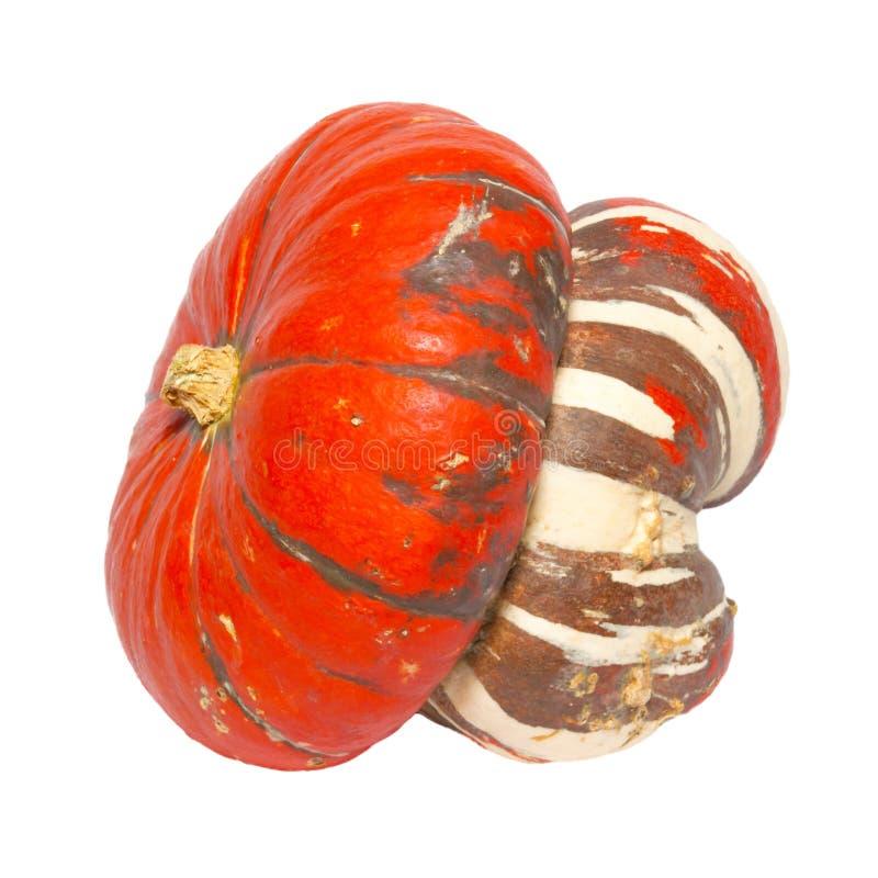 орнаментальный красный цвет тыквы стоковые фото