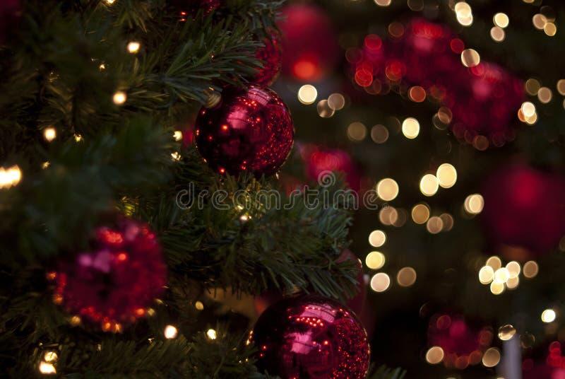 Орнаменты рождества в дереве стоковые изображения