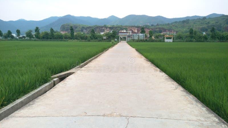 дорога к селу стоковое фото