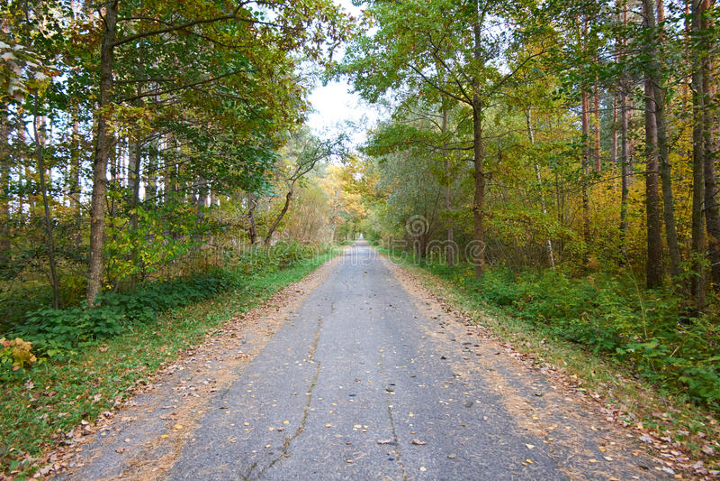 дорога осени к стоковые фото