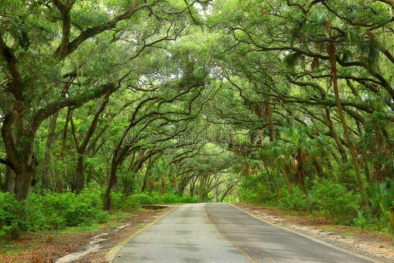 дорога сельской местности сценарная стоковая фотография