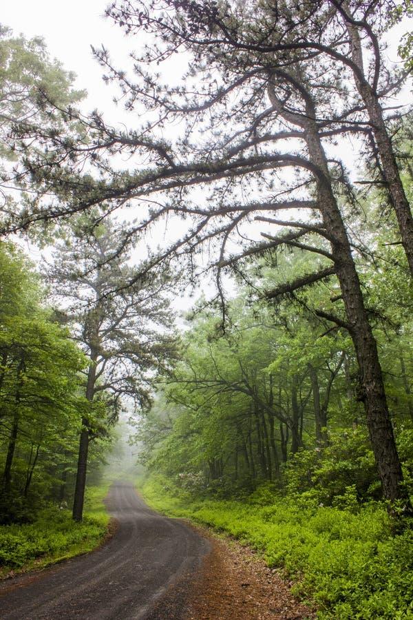 дорога тумана к стоковые изображения