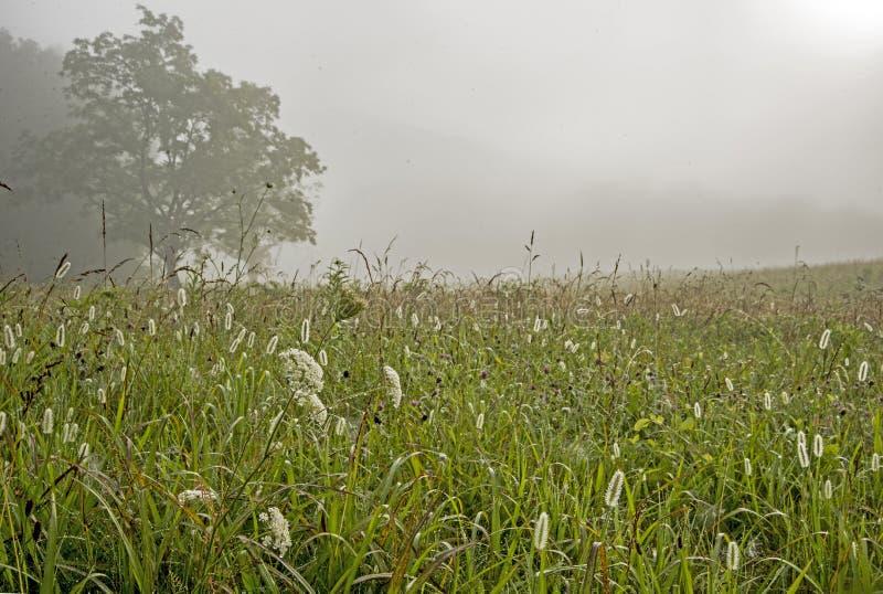 Оросите на травах в поле в бухте Cades стоковая фотография rf
