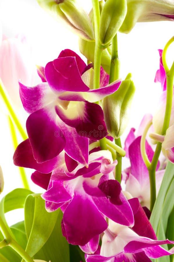 орхидеи ветви лиловые стоковые фотографии rf