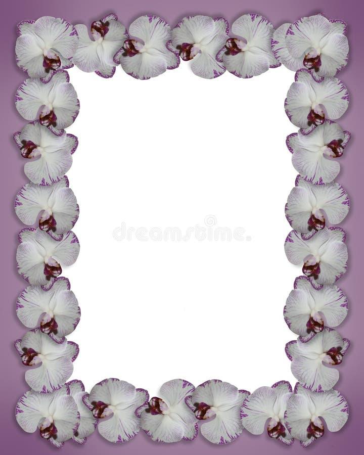 орхидеи граници пурпуровые иллюстрация штока
