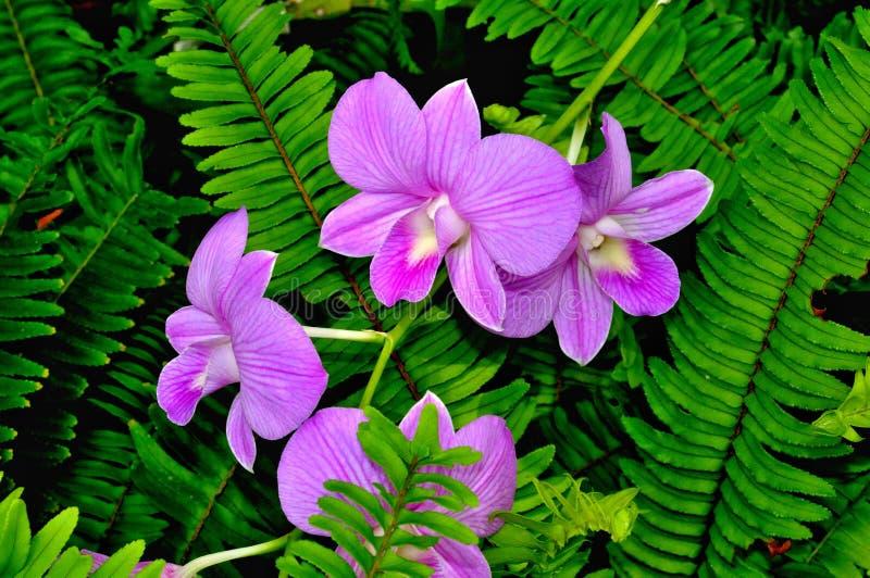 Орхидеи на зеленых лист стоковые фотографии rf