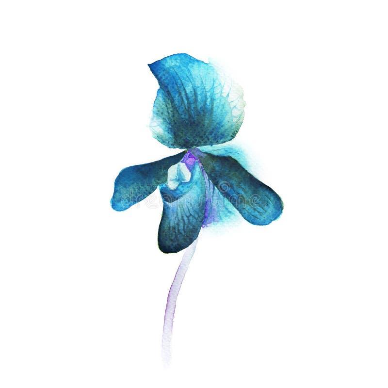 Орхидея акварели стоковое фото rf