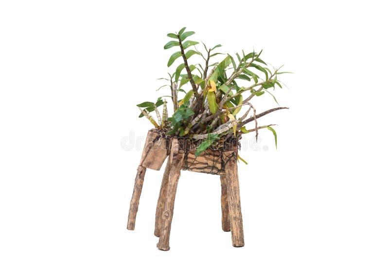 Орхидея в баке слона форменном стоковое изображение rf
