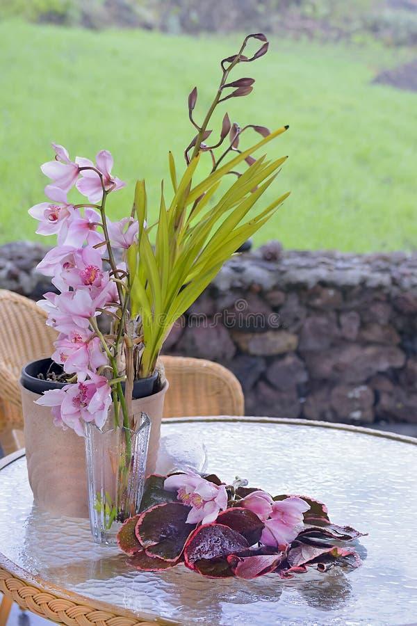 Орхидея в баке стоковое изображение