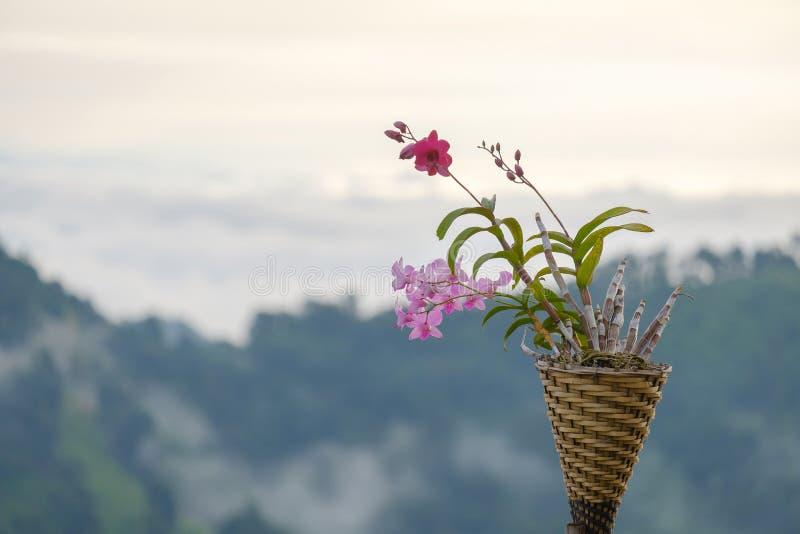 Орхидея в корзине стоковая фотография