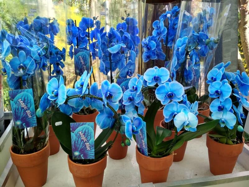 Орхидея в саде стоковые изображения rf