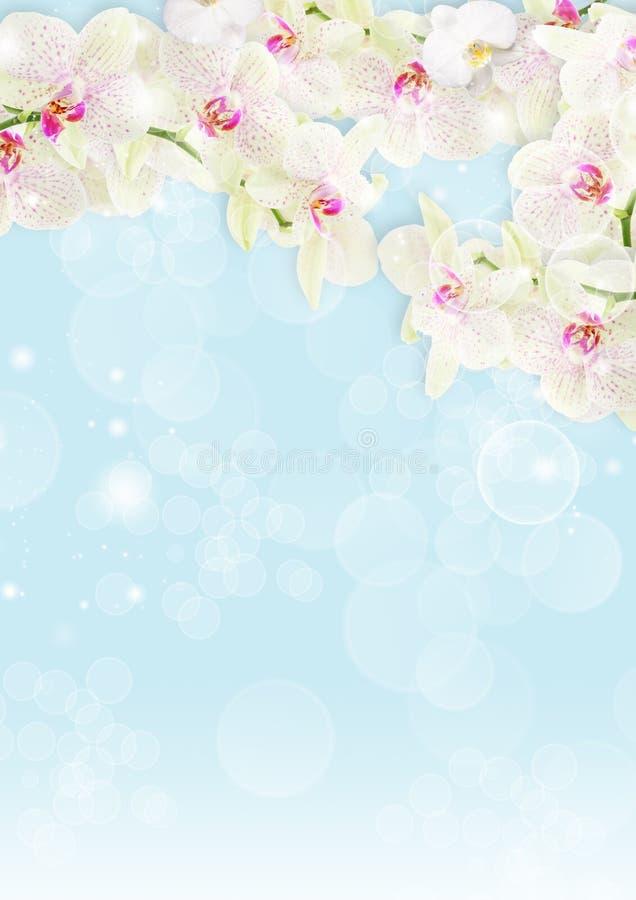 орхидея граници свежая иллюстрация штока