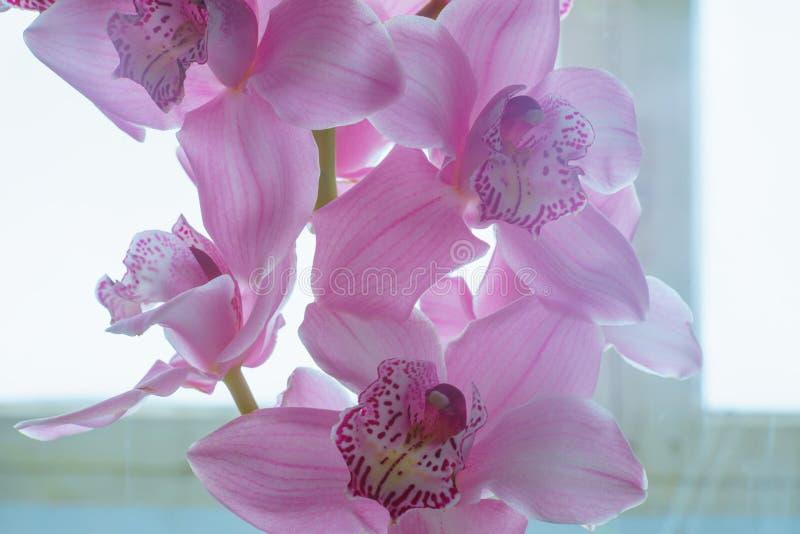 Орхидея цветет красивая флористическая предпосылка для поздравительных открыток, обоев, крышек, заставок, плакатов, приглашений с иллюстрация вектора
