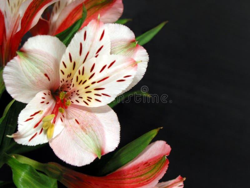 орхидея цветка стоковые фотографии rf