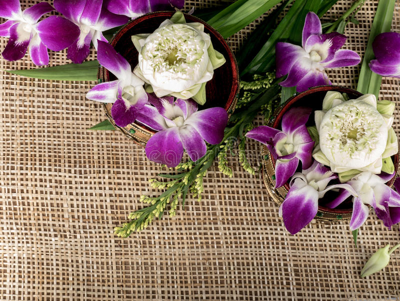 Орхидеи лотоса стоковые изображения rf