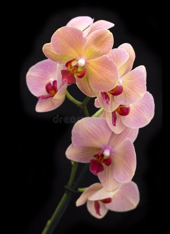 Орхидеи фото цветов в крупном