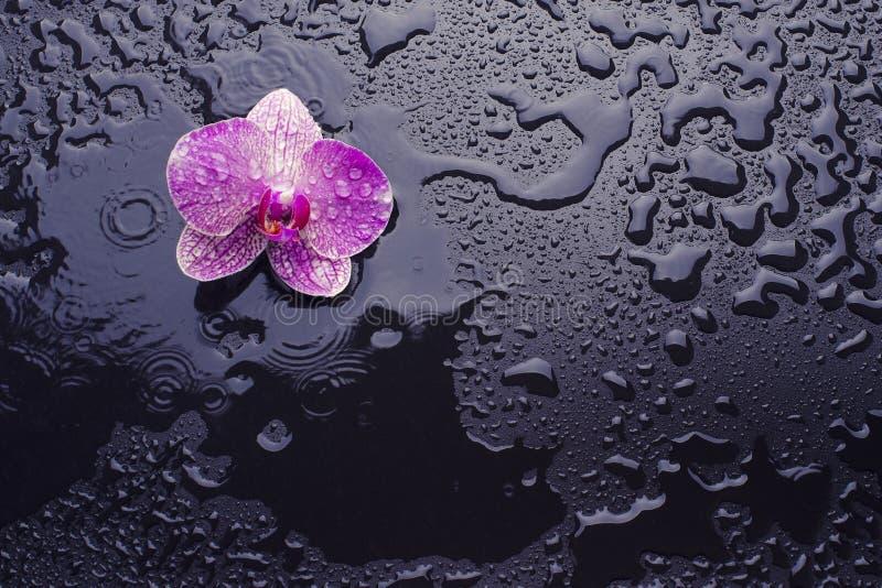 орхидея предпосылки черная стоковые фото